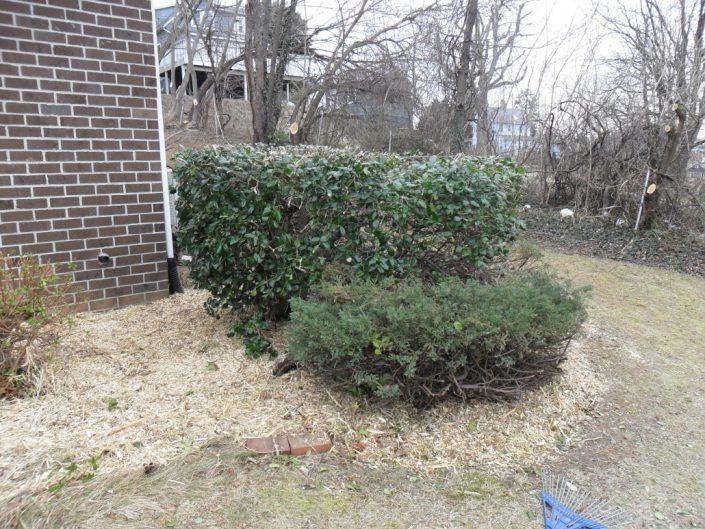 tree-services-13