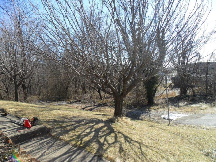 tree-services-19