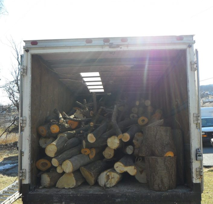 tree-services-21